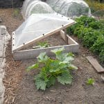 How to Make a Small Greenhouse for Seedlings