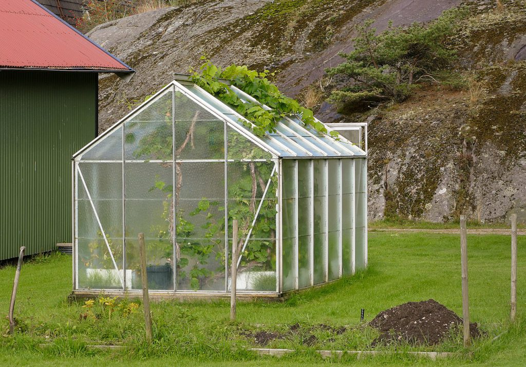How to Organize a Small Greenhouse