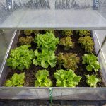 How Warm Do Plants Stay in a Small Pop-Up Greenhouse