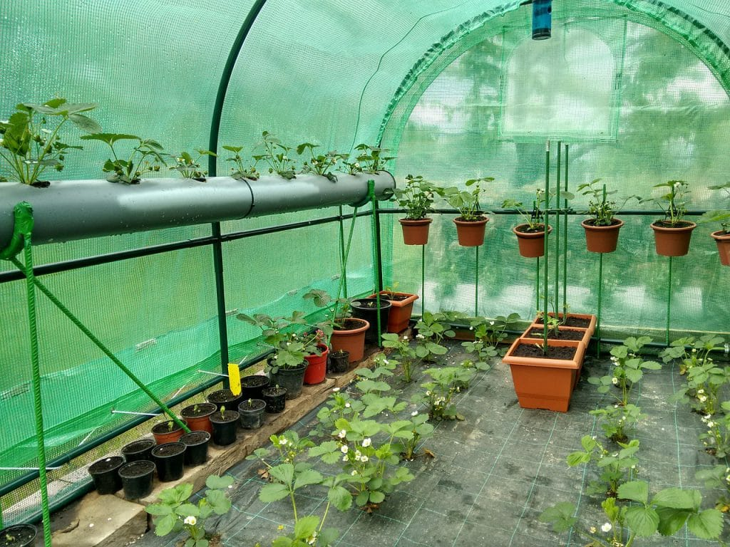 How To Keep Small Hobby Greenhouse Warm
