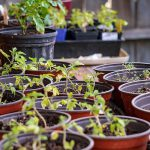 How to Place Your Plants in a Small Greenhouse