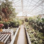 Where To Put Greenhouse In Your Yard