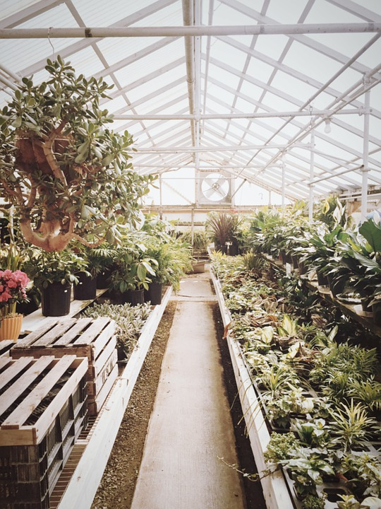 Where to Put a Greenhouse in Your Yard