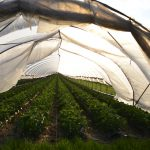 What Temperature Is Too Hot For A Greenhouse And Why