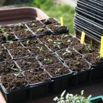 How To Start Seeds In A Small Greenhouse