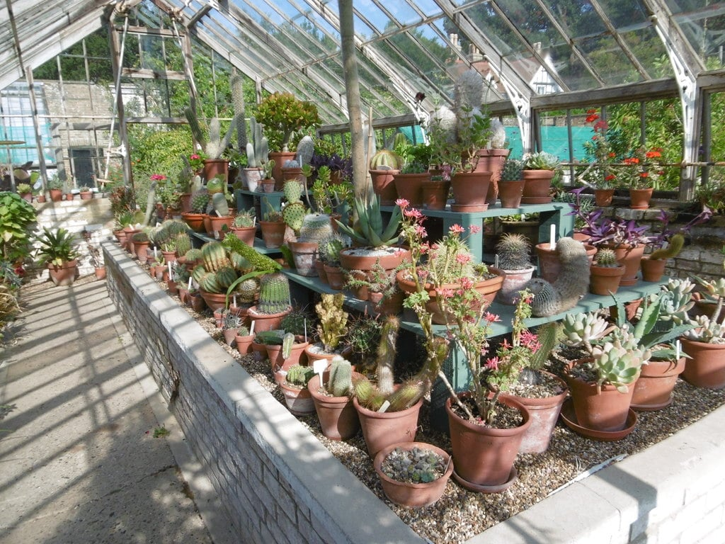 How Hot Can a Greenhouse Get