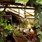 How To Purify Air In The Small Greenhouse