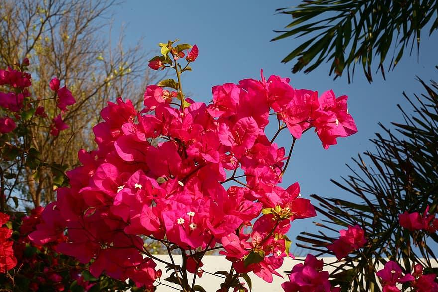 When Do Crepe Myrtles Bloom In Florida