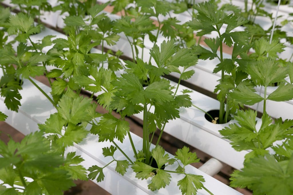 How Often Do You Change Water In Hydroponics