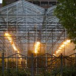 When To Use A Growing Light In A Greenhouse