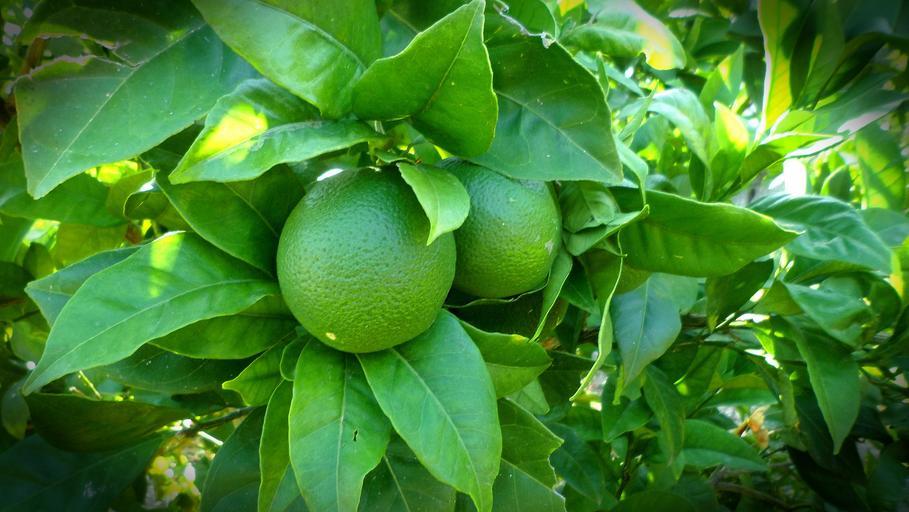 How Fast Does Lemon Lime Nandina Grow
