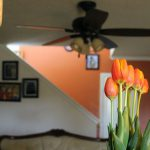 How to Force Tulips to Bloom Indoors