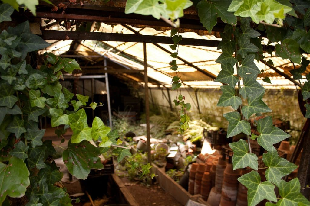 3 Best Ways On How To Shade A Greenhouse