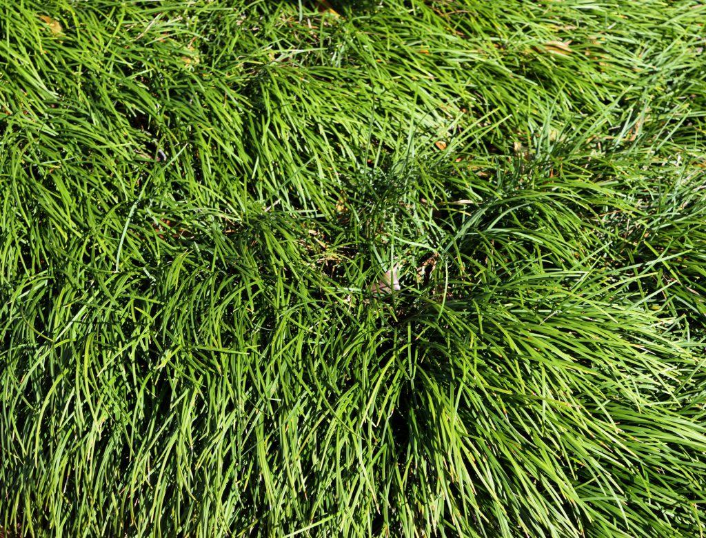 When Do Ornamental Grasses Start Growing