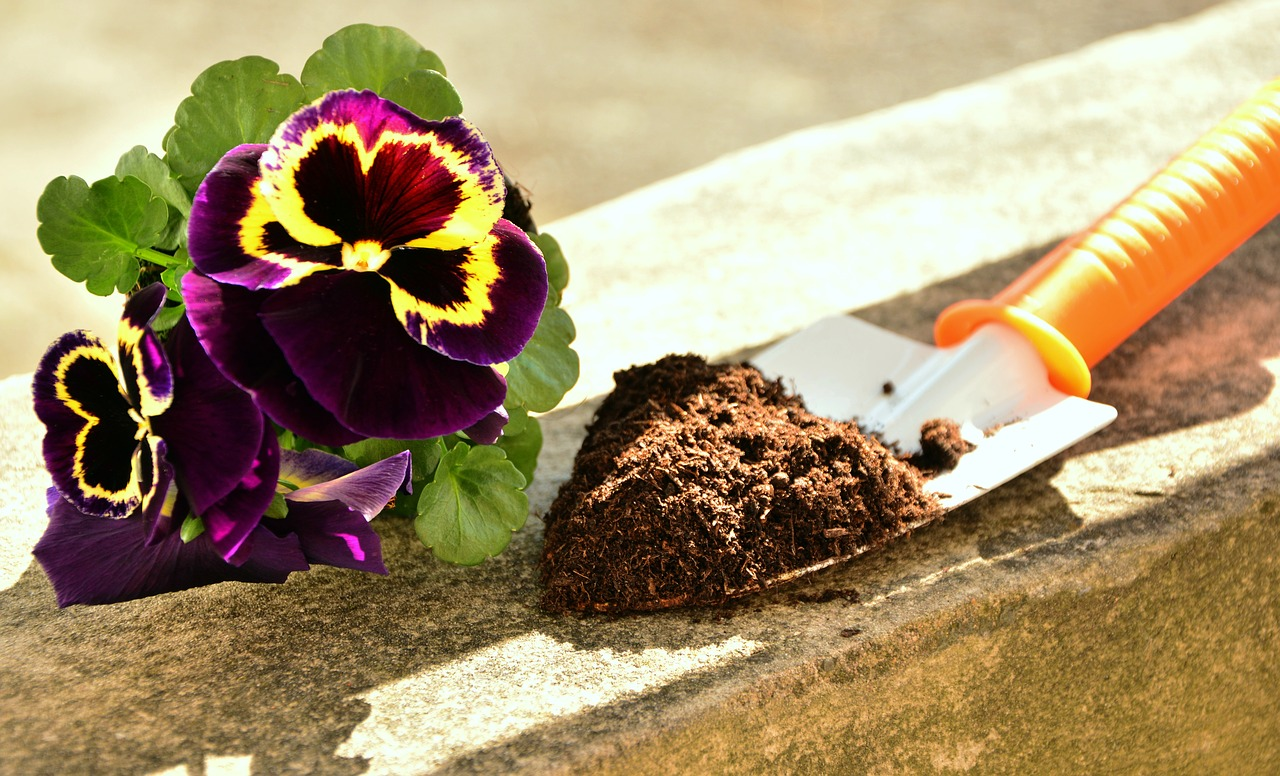 How Long Does It Take To Grow Pansies From Seed - Krostrade