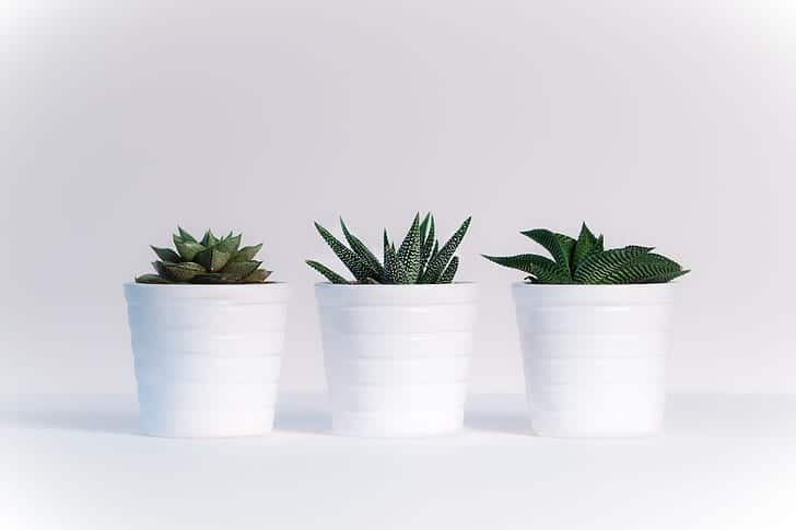 How To Clean Smart Pots The Correct Way