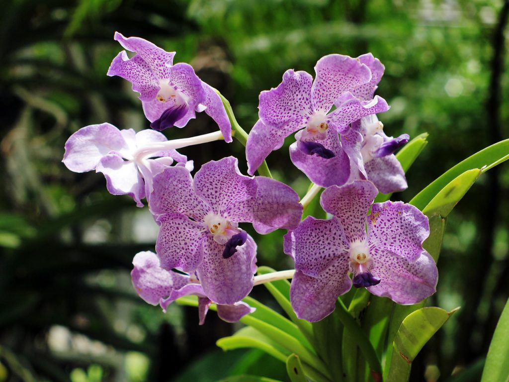 How To Breed Orchids. The 3 Best Ways
