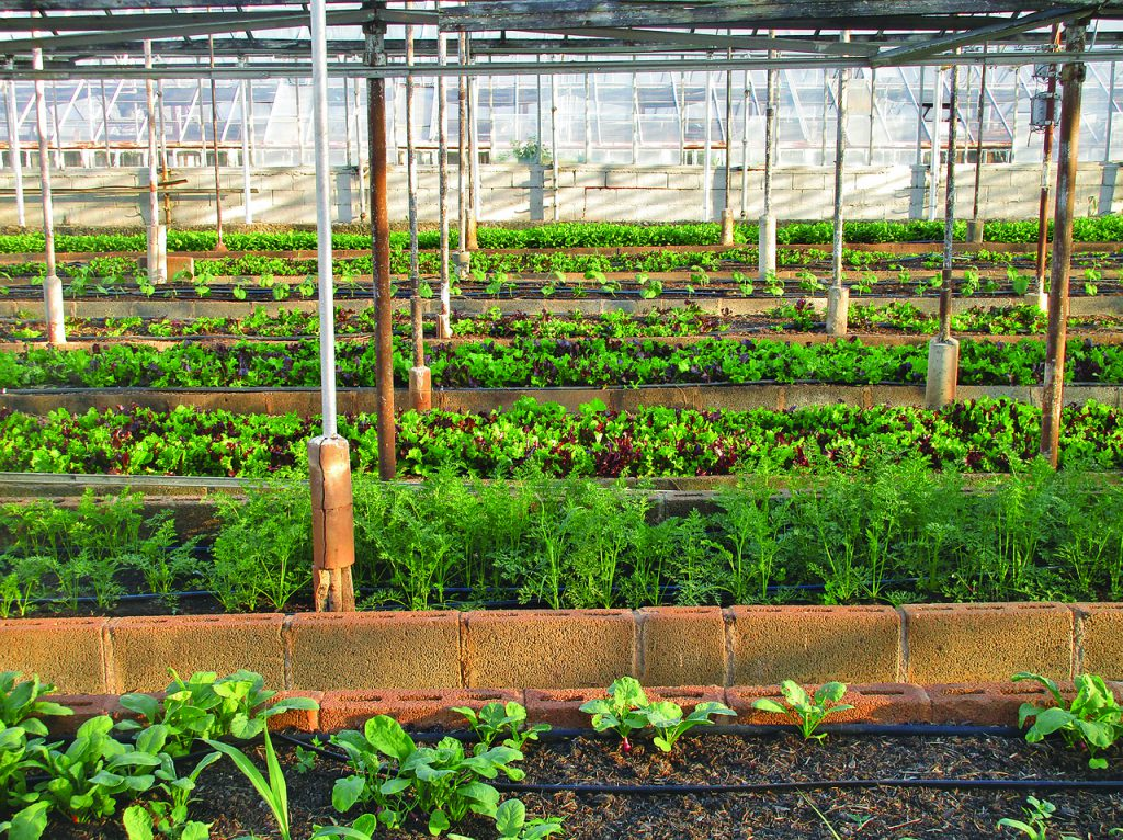 how much does a small family greenhouse business make