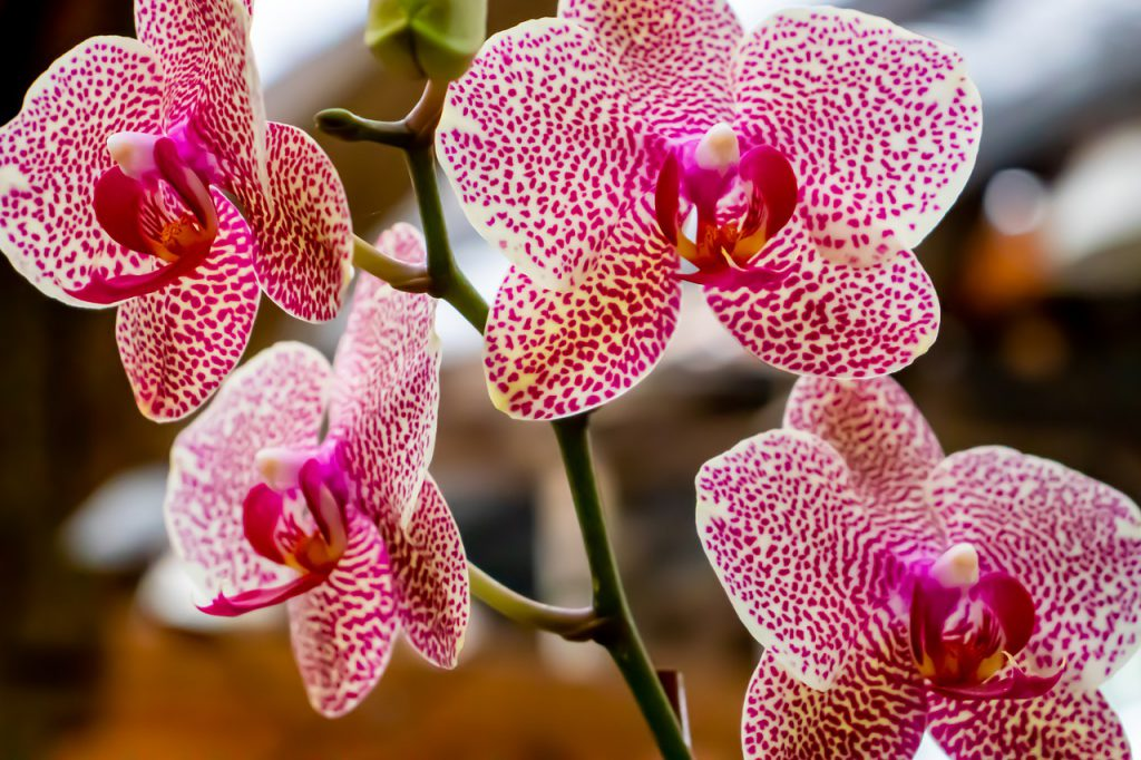 How To Cross Breed Orchids Successfully