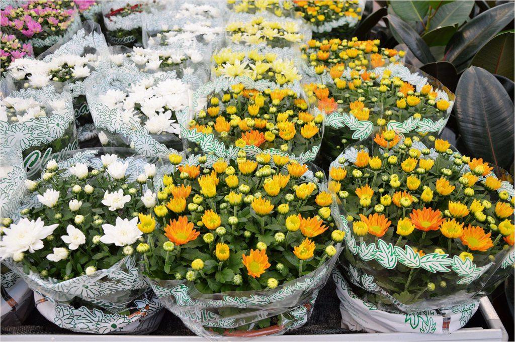 Indoor Plants: When Should You Induce Flowering