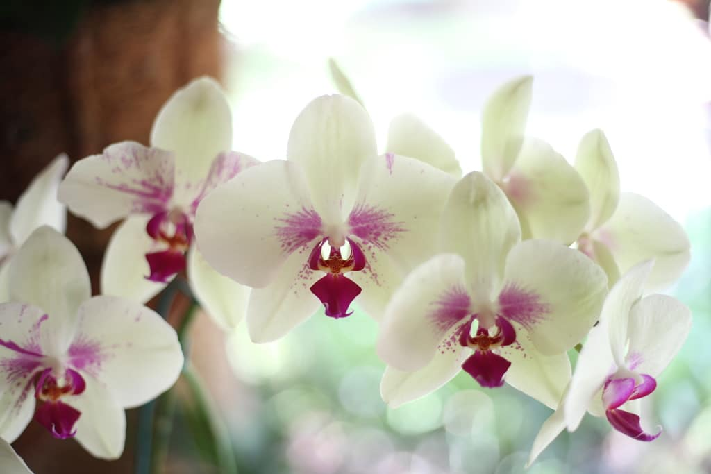 How to Get Rid of Mealybugs on Orchids: 3 Easy Tips