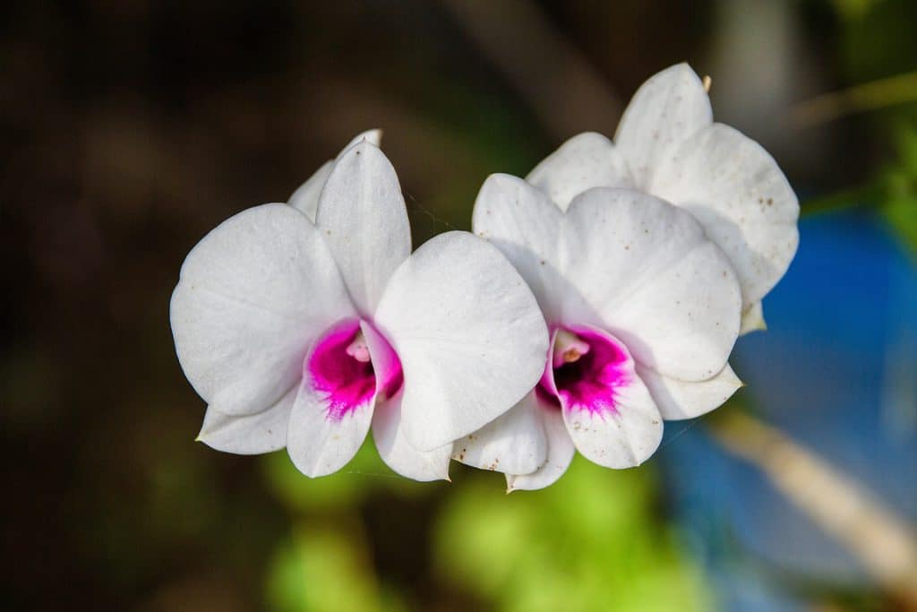 How To Get Rid Of Spider Mites On Orchids