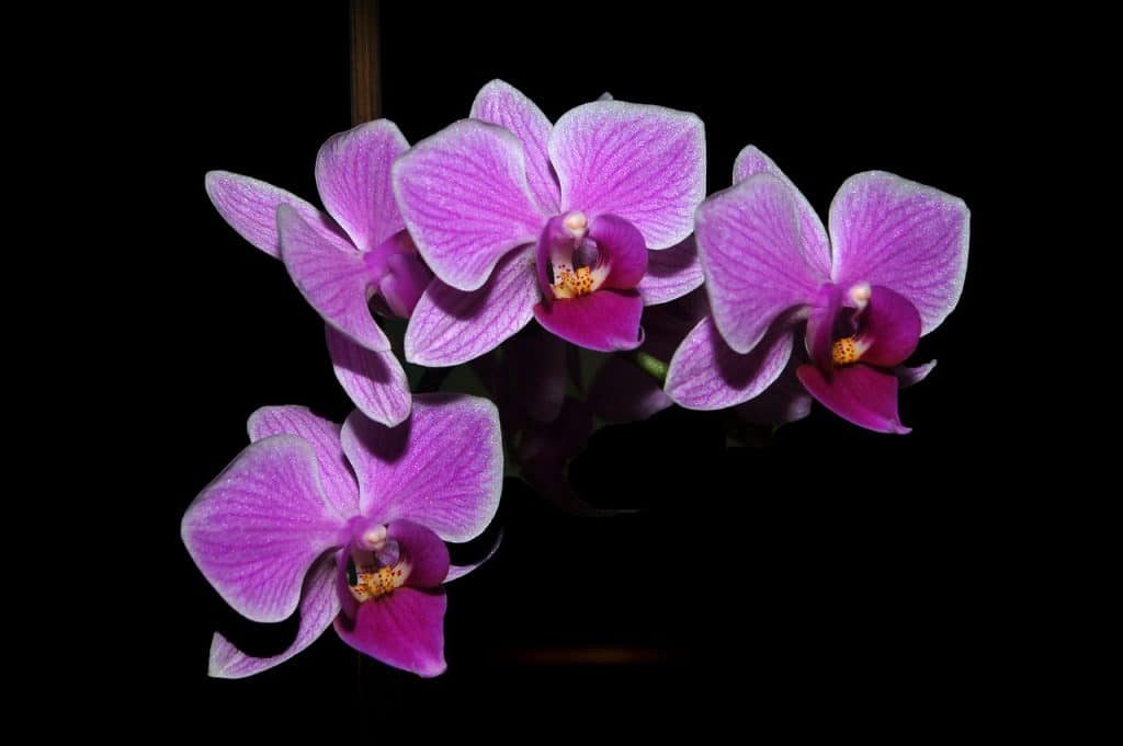 3 Best Ways On How To Propagate Orchids