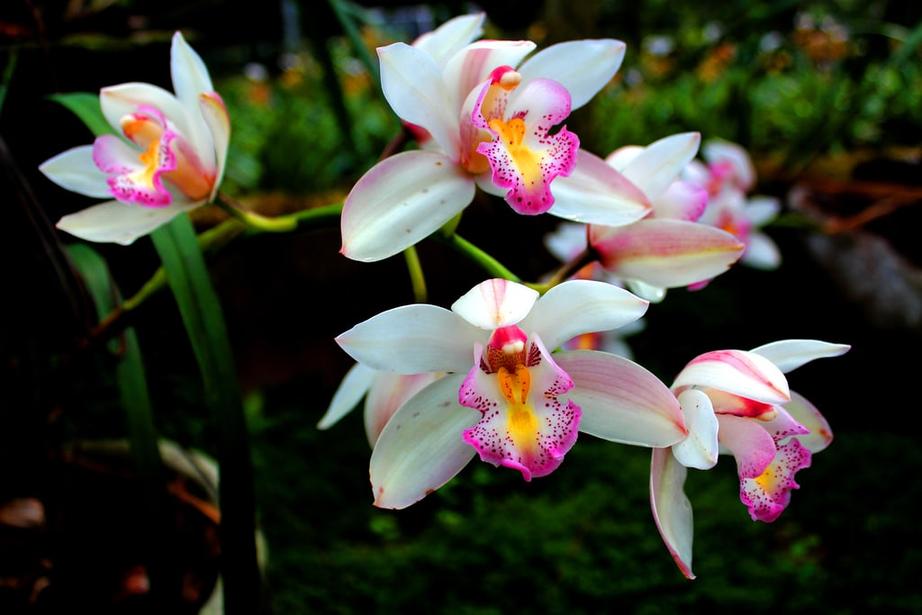 Best Guide On How To Divide Orchids