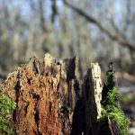 How to Prevent Root Rot – Causes, Prevention, and Control