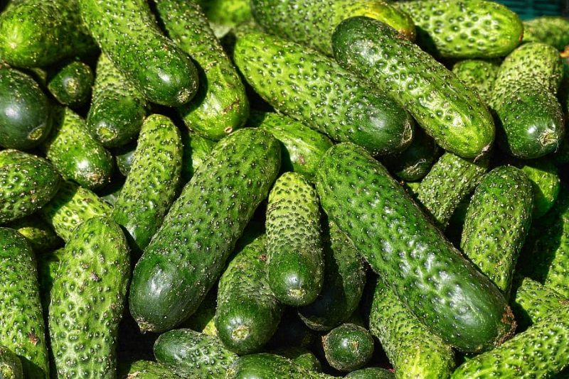 How To Train Cucumbers Successfully