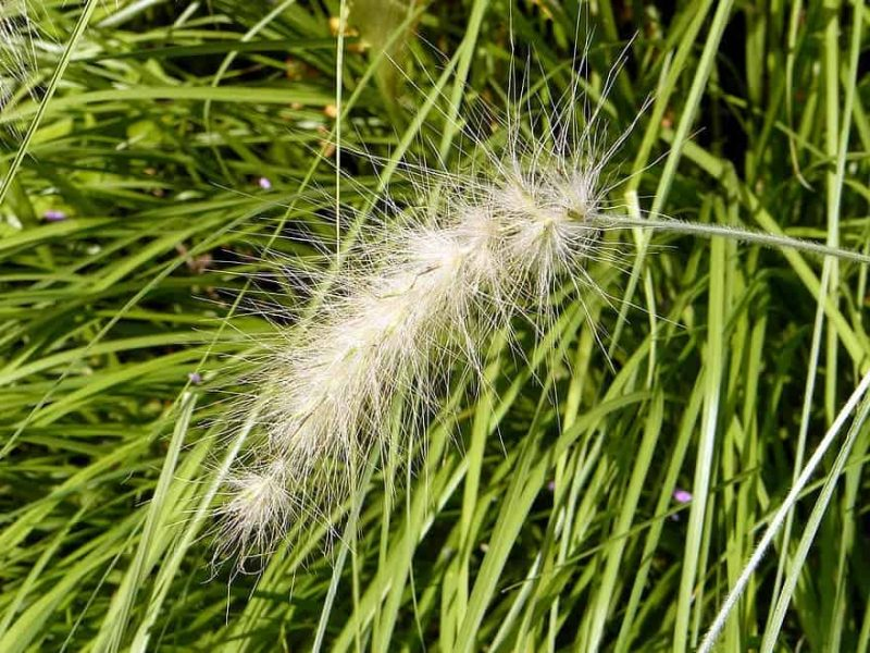 How To Remove Ornamental Grasses Best Guide