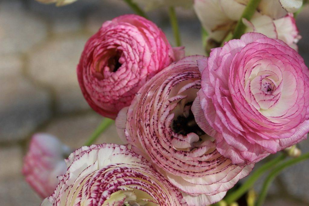 How to Keep Gerbera Daisies Blooming: 6 Useful Tips