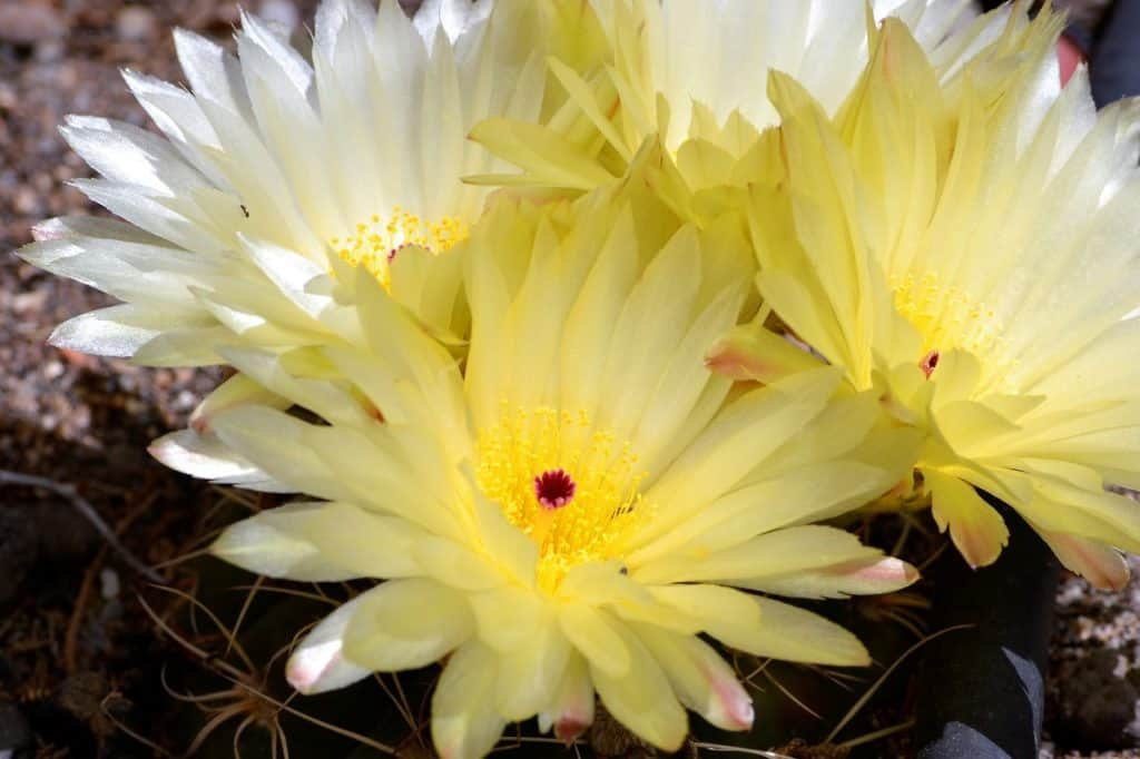 How To Take Care Of A Spring Cactus Successfully