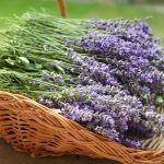 How to Sell Lavender: The Basics