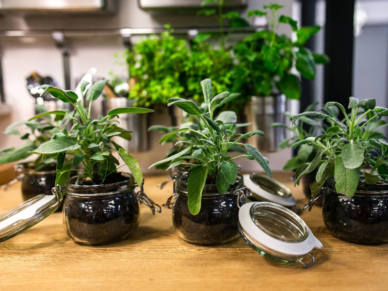 How to Apply Diatomaceous Earth on Houseplants Using 2 DE Application Methods