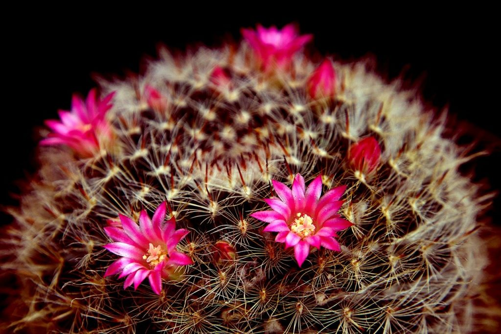 How to Remove Fake Flowers from a Cactus Without Damaging the Plant