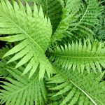 How to Winterize Ferns: Need-to-Know Facts