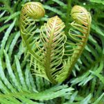 How To Overwinter Ferns. Best 3-Step Guide