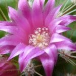 How To Get Cactus To Bloom. 2 Factors For Success