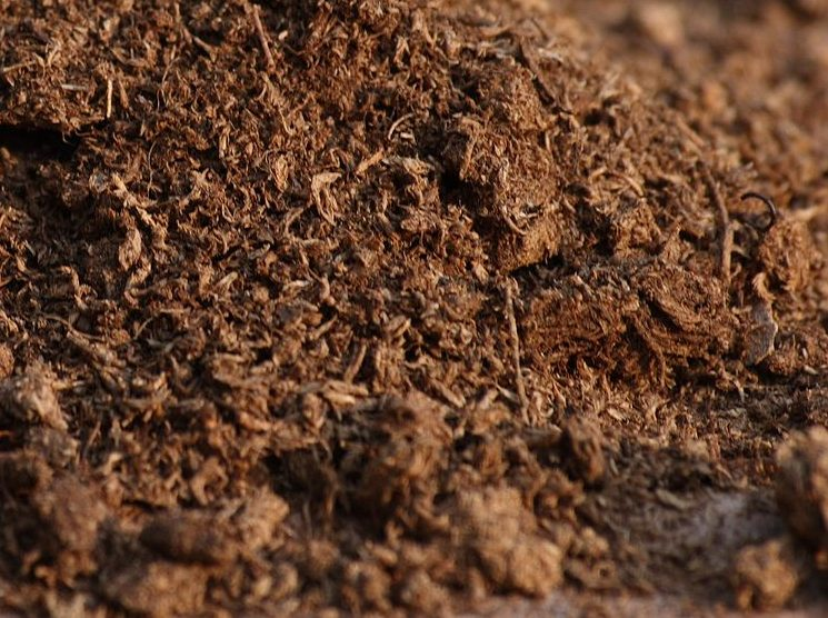 How to Spread Peat Moss for Your Plants in 3 Steps