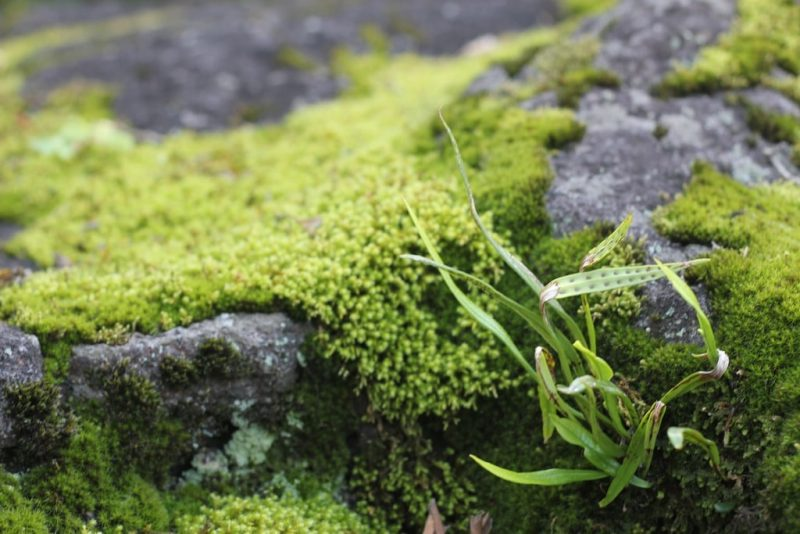 How to Control Green Algae in Your Soil