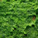 How to Get Rid of Green Algae On Your Seeding Soil