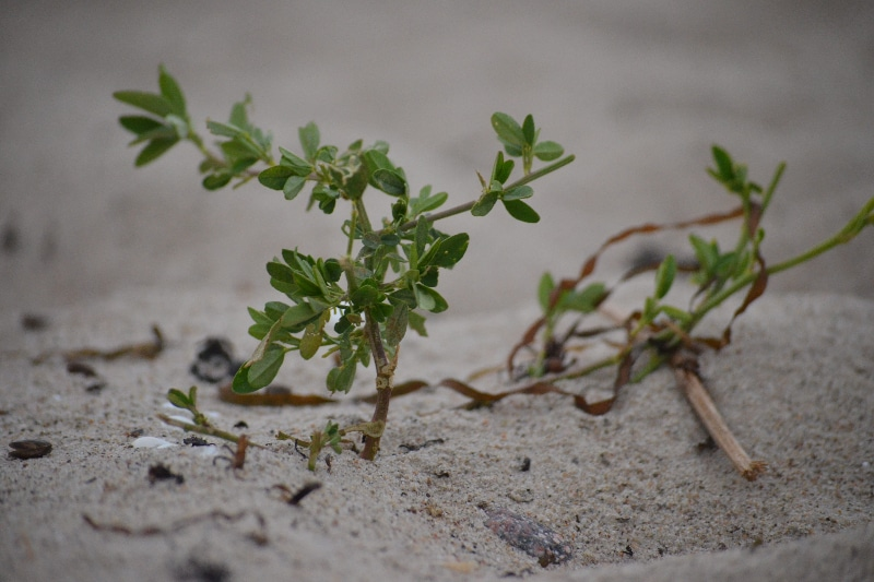 How To Sterilize Sand For Plants In 3 Easy Steps