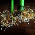 How To Fix Root Rot Hydroponics In 6 Easy Steps!