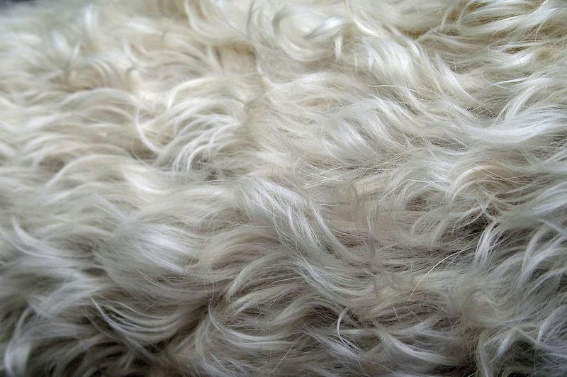 how to get dog hair out of a blanket