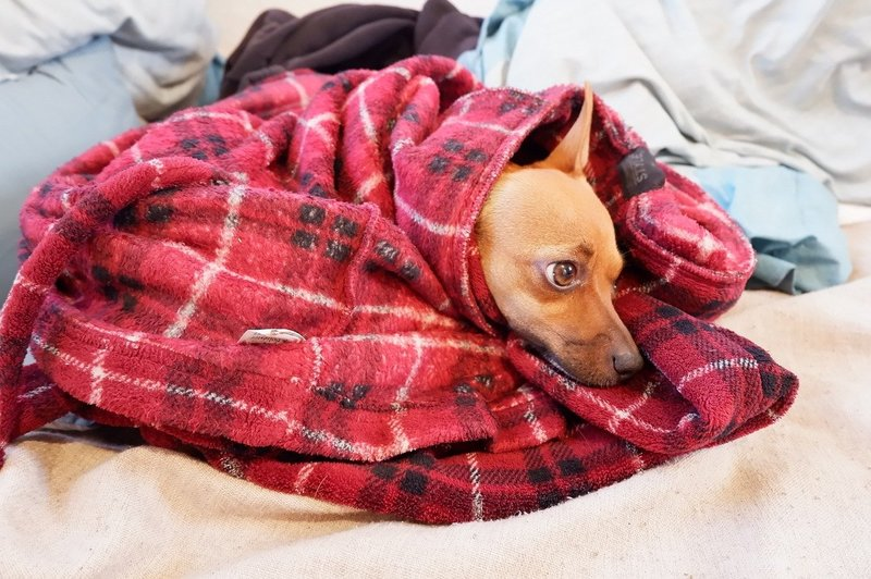 how to get dog smell out of blanket