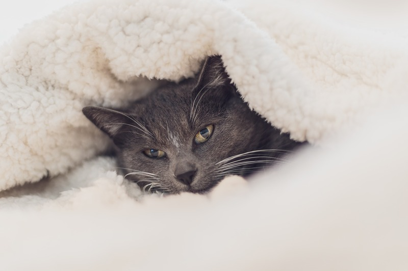how to stop fleece blanket from shedding