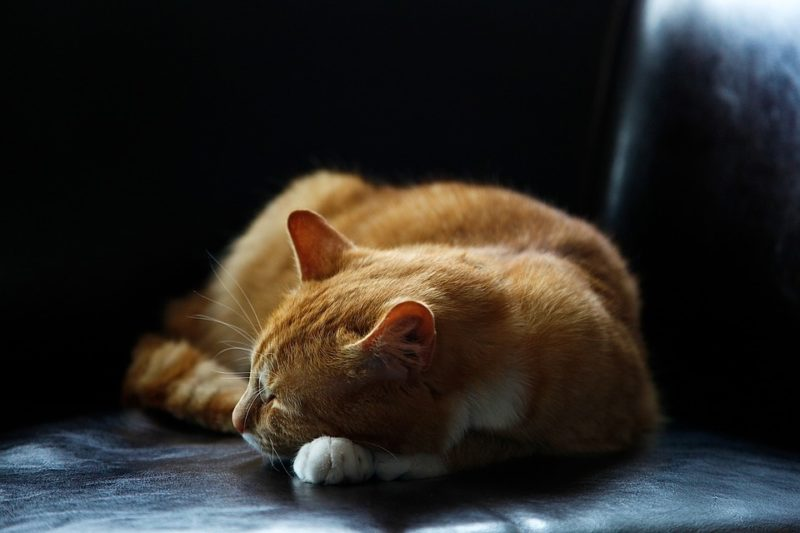 How To Repair Cat Scratches On Leather Sofa