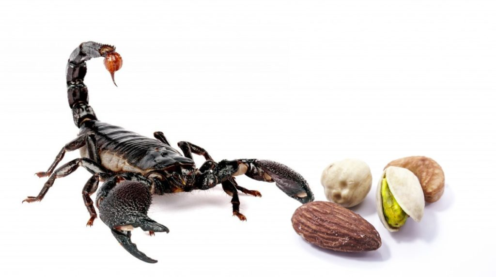 how do you keep scorpions out of your bed