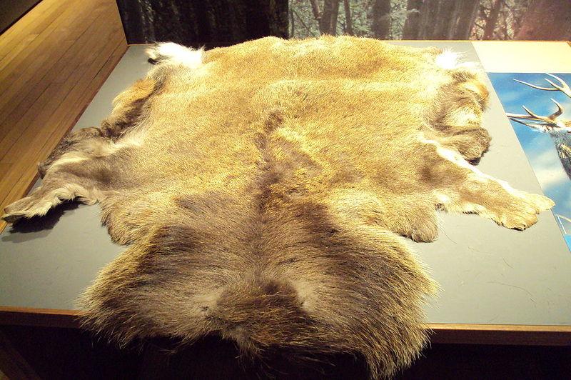 how to make a deer skin blanket